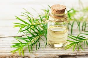 Read more about the article Scabies: Home Treatment With Tea Tree And Clove